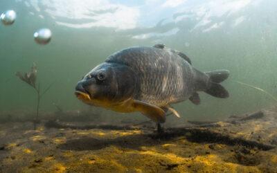 Algen- und Fischöl hilft bei Entzündungen und Zivilisationskrankheiten