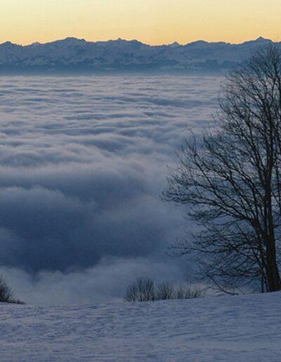 Die schneebedeckte Wiese endet in einem kilometerlangen Nebelmeer. Auf der Höhe des Wiesenendes stehen kahle dunkle Bäume. Ganz hinten sind Berge und das Abendrot zu sehen.